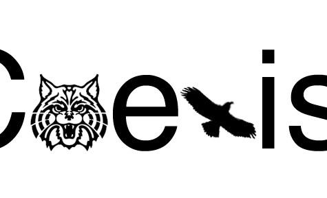 Divided We Fall, Osprey v Wildcat